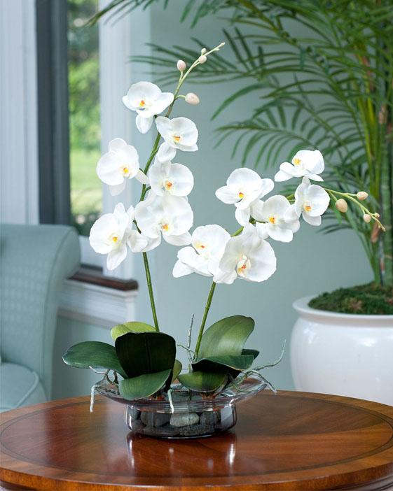 Como usar plantas naturais na decoração